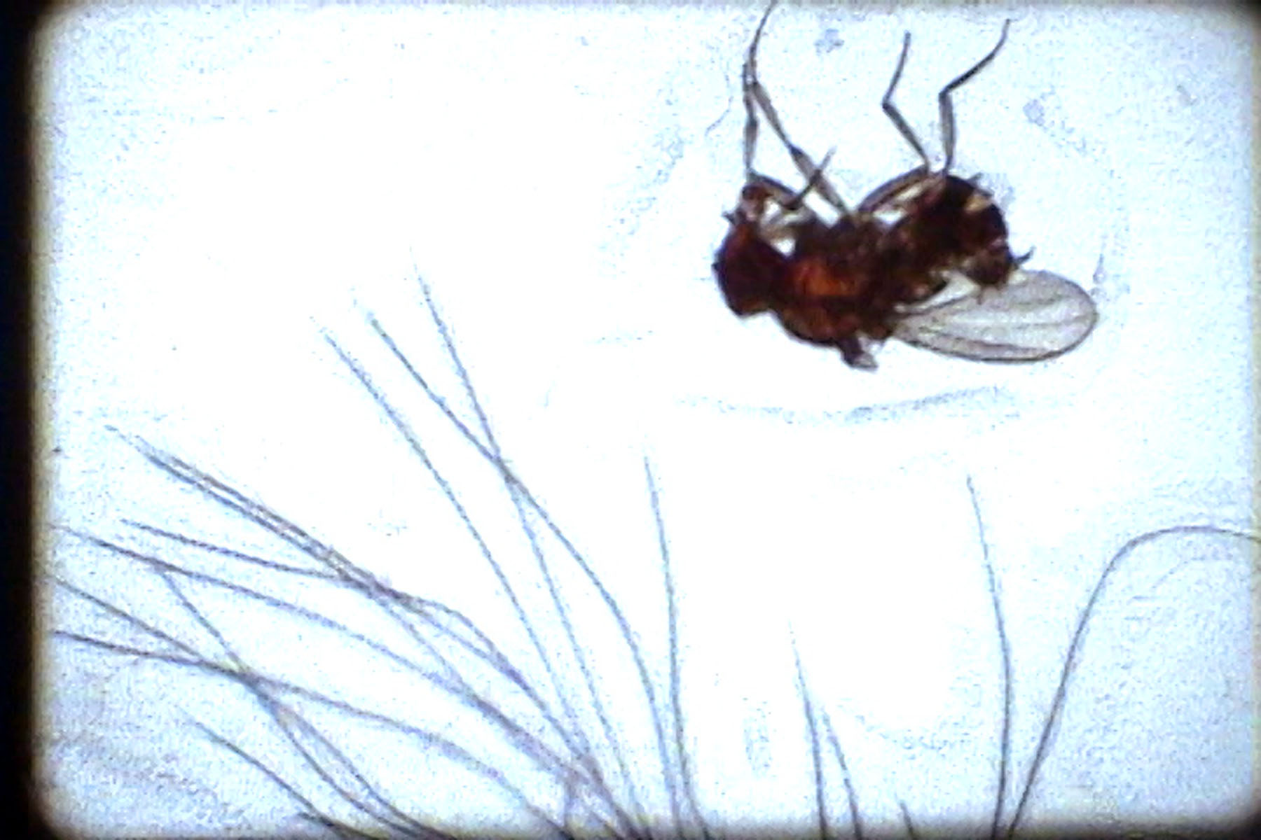 12Fruit Flies_Christine Lucy Latimer_film still_2