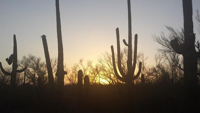saguaro-smaller